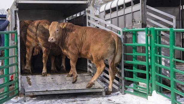 23/07/2019 : Restrictions concernant le transport routier d'animaux vivants en France pendant la canicule