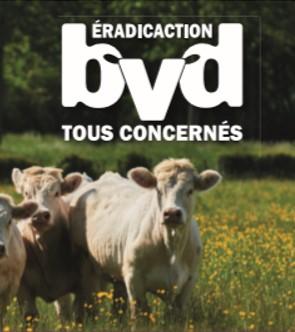 9/12/2020 : L'éradication de la BVD est en marche !