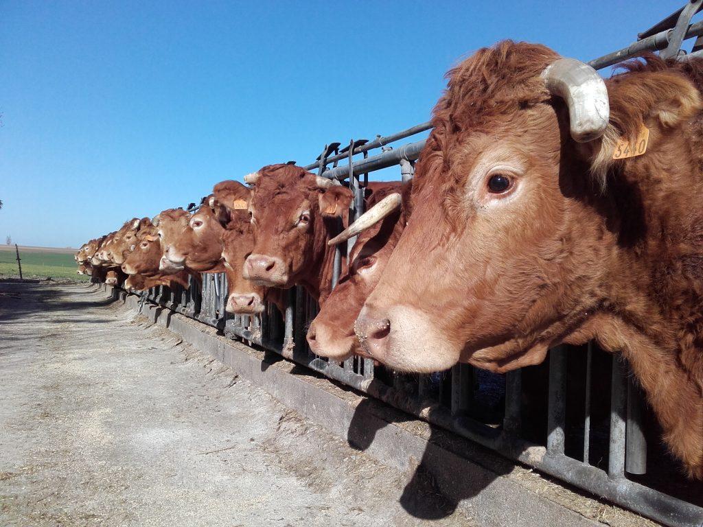 Prophylaxie bovine collective : en avant pour une nouvelle campagne !