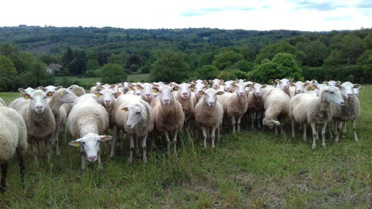 2/03/2021 : Le ténia des ovins