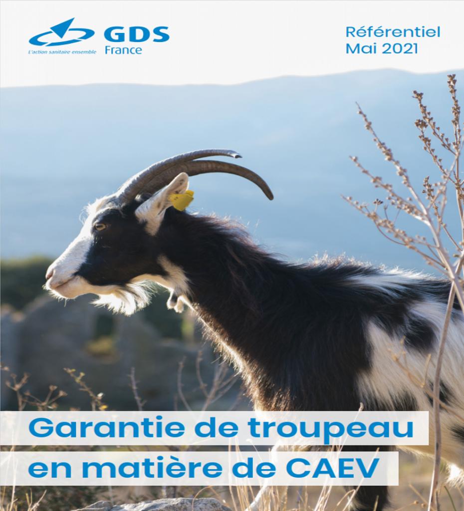 27/07/2021- Filière caprine : référentiel sur la «Garantie de troupeau en matière de CAEV»